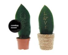 Flora coming soon