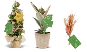 ficus en kerstboom en droogbloem met personalisatie